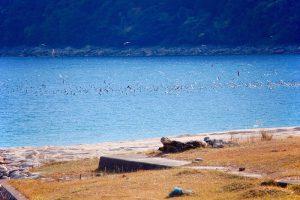 冬には多くの渡り鳥が三木里ビーチに訪れる