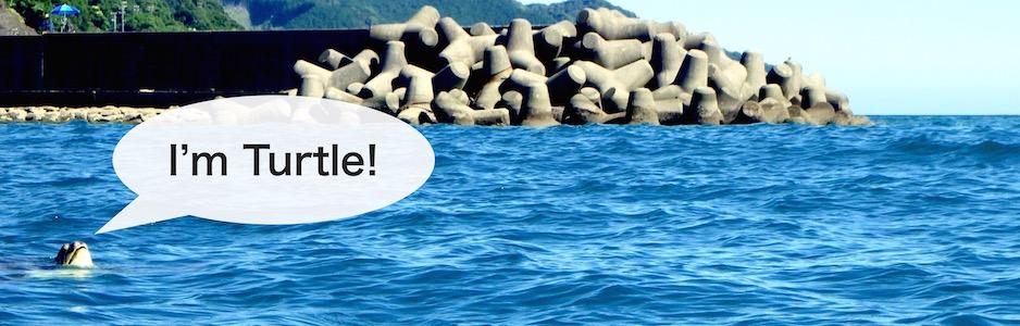 海ガメが海面にぽっかりと・・・ I'm Turtle!